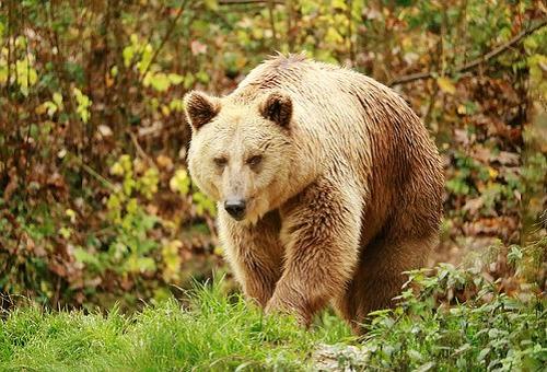 熊 いない 多い 県