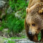 熊と遭遇しないために!熊の嫌いな臭いや音は?