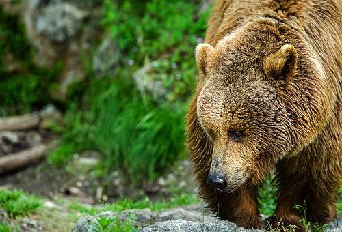熊 嫌い 臭い