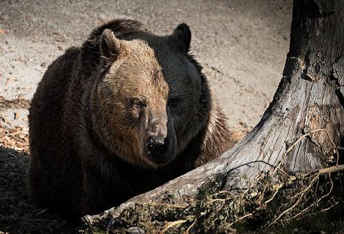 熊 狩猟 許可 方法