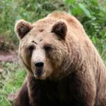 熊の餌!人間を餌だと思うことがあるの?