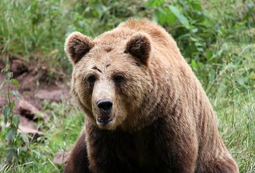 熊 餌 人間