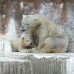 熊と白熊を交配!どうなる!?