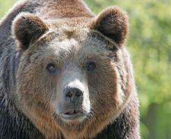 熊 駆除 報酬