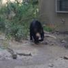 熊 飼育 許可