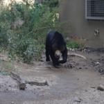 熊の飼育!許可はいる?