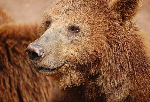熊 毛 剃る 色