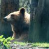 熊 油 効果