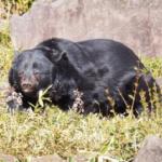 熊の解体方法は?狩猟出来る時間やルールやマナーは?