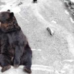 犬と熊の大きさの違いは?犬の熊への強さについて!