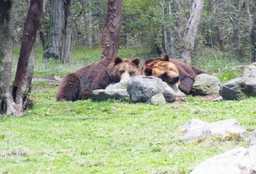 熊 習性 埋める