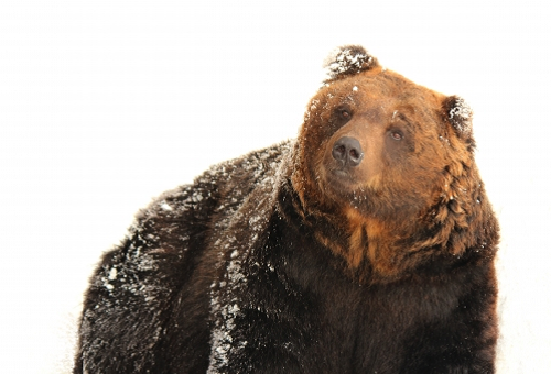 熊 対策 音楽 鈴 爆竹