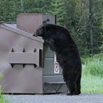 車で熊に遭遇した時の対策方法は?自転車では?