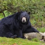 熊に遭遇した時の対処法!亡くなったふりは効果があるの?