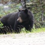 熊との遭遇で事故に遭う確率は?東京にも熊はいる?