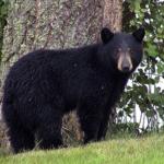 熊撃退スプレーの効果や価格はいくら?スプレーの期限は?