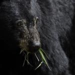 熊の急所は鼻?熊の能力は!?