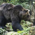 日本神話の熊は悪者?登場する熊とは?