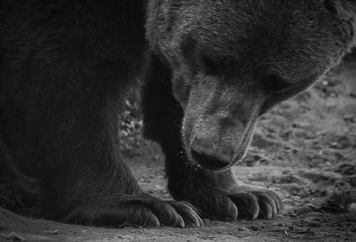 熊 パンダ 白熊 違い
