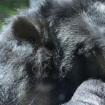 熊の生態系!役割は?