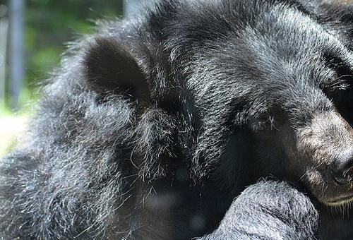 熊 生態系 役割