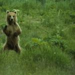 熊の行動!夜に行動が活発になるのはなぜ?