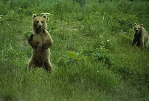 熊 行動 夜