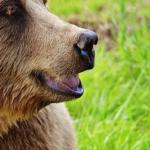 熊の視覚!色の識別はできる?
