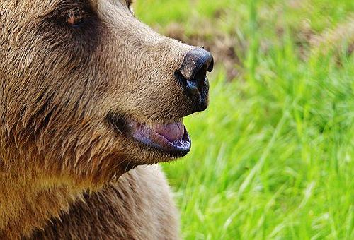熊 色 識別