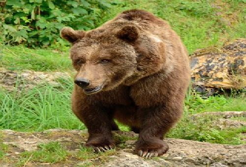 熊 上り 下り