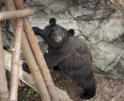熊 飼育 方法 値段