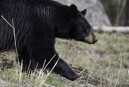 熊 行動 時間