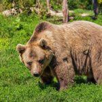 熊はなぜ人間を襲うのか!?