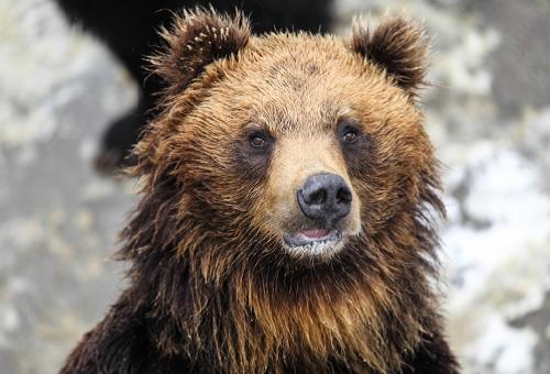 熊 胆汁 効果 効能