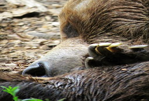 熊 血抜き 方法