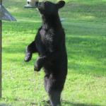 熊が家の中に入ってきた!対策方法は?