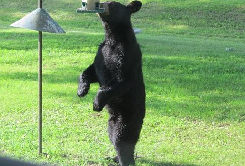 熊 対策 家