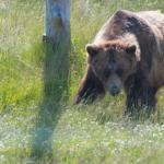 車や自転車に乗ってる時に熊に遭遇した!対策方法は?