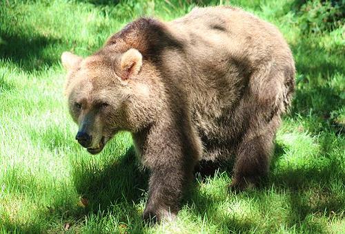 熊 スプレー 傘 効果