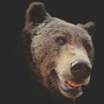 熊はなぜ人間を襲うようになったの!?