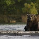 熊の糞の特徴!臭いは?