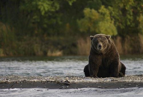 熊 糞 特徴 臭い