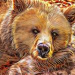 熊の油の作り方!効果は?
