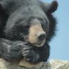 熊 人間 年齢