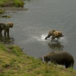熊が活発で危険な時期っていつ!?