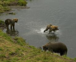 熊 危険 活発 時期