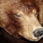 世界の熊の種類の大きさや強さは!?1番強いのは何?