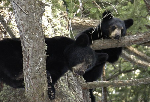 熊 出産 時期 体重