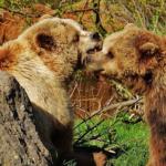 熊のオスとメス!性別の見分け方は?