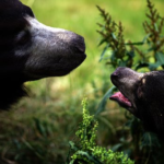 熊の子供の数や大きさってどれくらいなの?